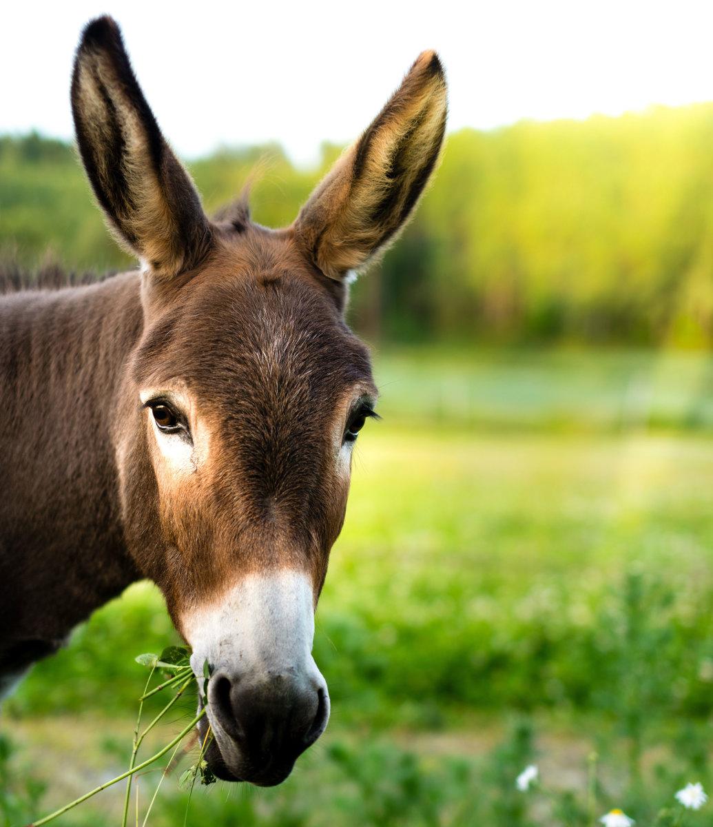 AgSite logo of donkey